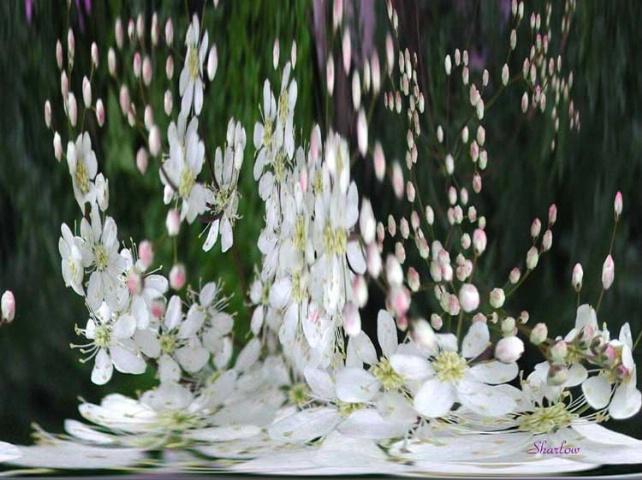 Petals from Heaven