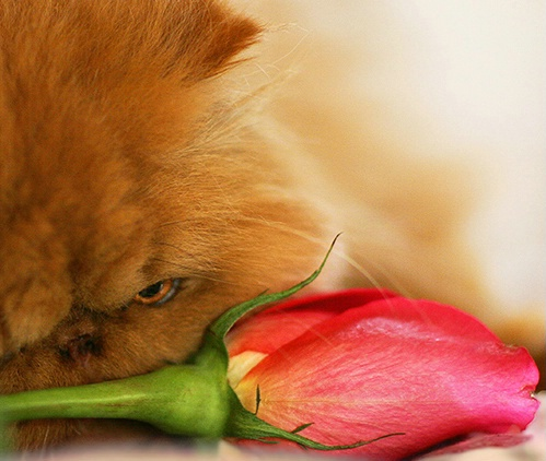 Stopping To Smell The Flower..before eating it