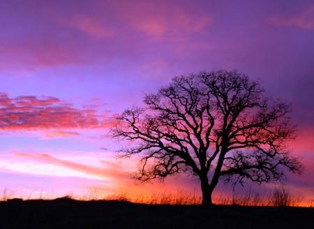 Sunsets Silent Watcher
