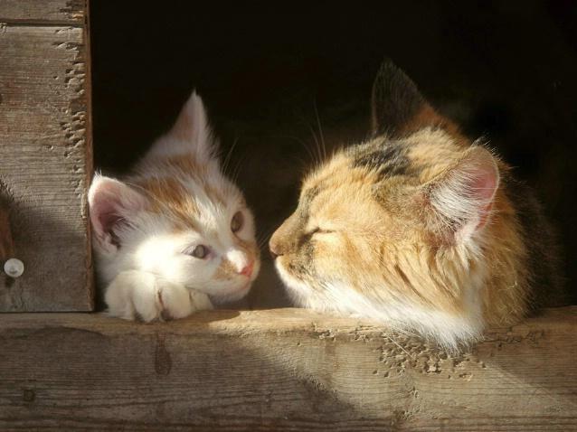 Kitty Closeness