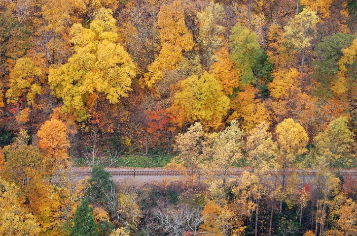 Passage Through Golden Trees