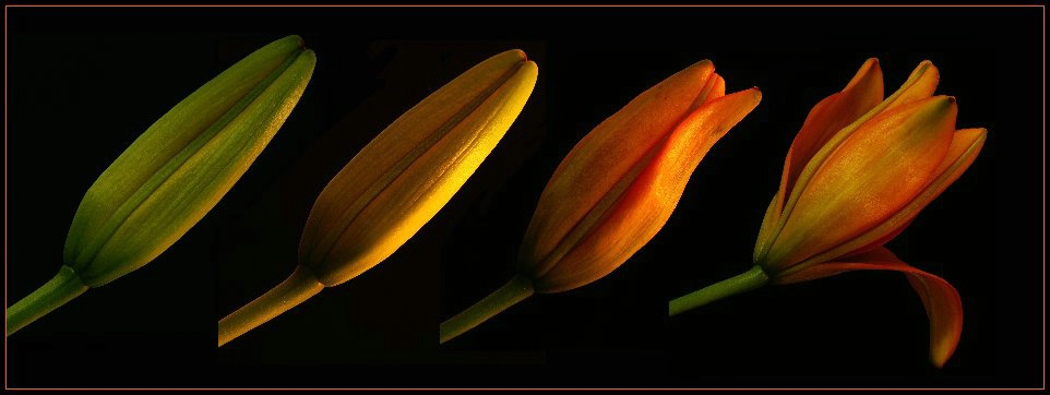Floral Transformation.