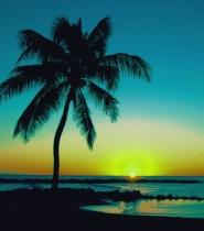 Kauai Happy Hour