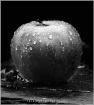apple in the rain