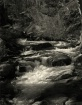 Stream in the eas...