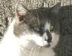 Catcat