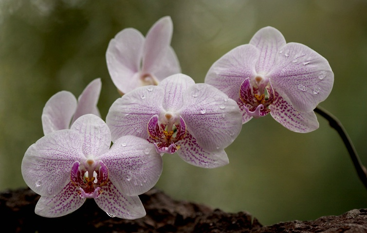 Orchid Scape