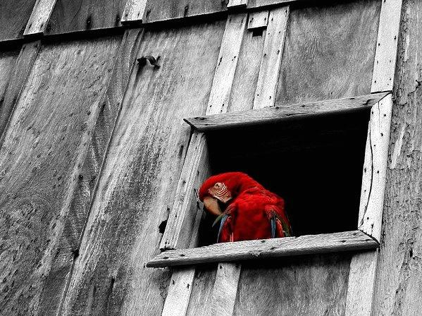 A janela (The window)