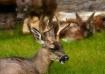 The Deer Family P...