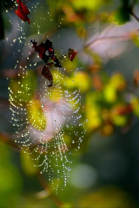 Delicate Spiderweb draped in dawn mist
