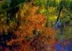 Autumn Transforms