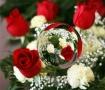Flexed Roses