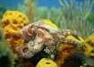 Baby Octopus - Do...