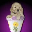 Puppy Pot