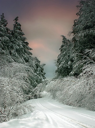 The Photo Contest 2nd Place Winner - ...a winter drive....