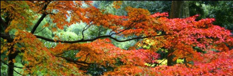 Aki no Yume: Autumn Dream - ID: 1724159 © Michael Hattori
