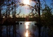 Sun and Cypress