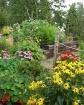 Garden of Color