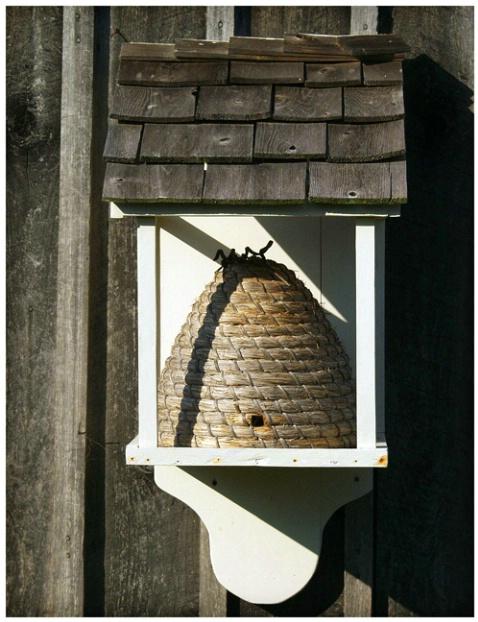 Beehive #179 - ID: 1748283 © Timlyn w. Vaughan