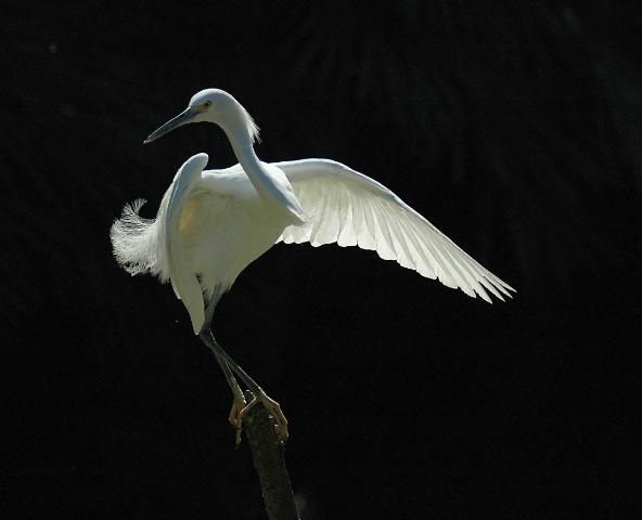 Egret On A Pole 2
