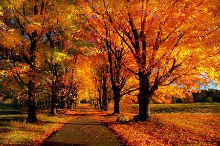 Autumn Allee