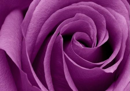 ~ Purple Swirl ~