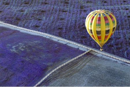 """""""Fields of  Lavendar in my Yellow Balloon"""""""