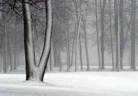 River Snow Trees