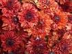 Brown flowers (ch...