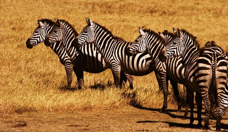 Striped Attention: Tarangire