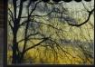Tree Reflections ...