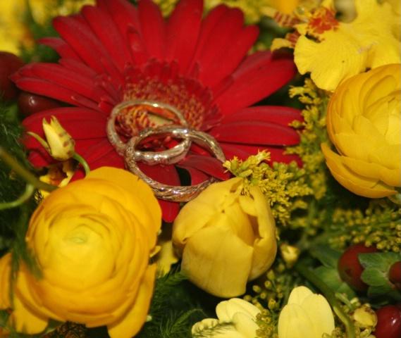 Autumn Rings