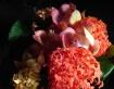 flower - nagaling...