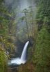 Rainforest Falls