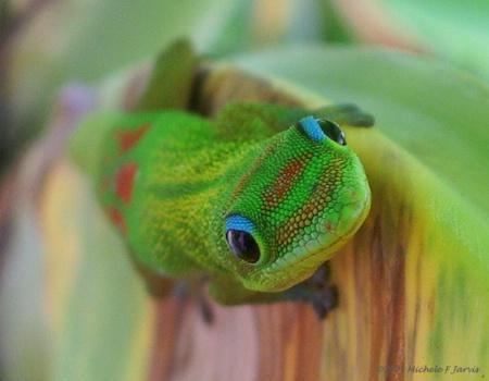 Gecko Curiosity