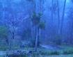 Foggy Sunday Morn...