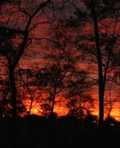 Sunrise through the Trees 1765