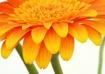 Floral Sunshine