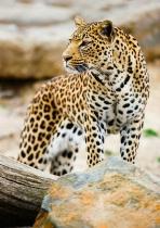 Profile of the Hunter