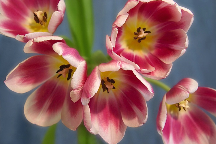 Le Printemps Fleurit