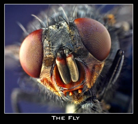 + The Fly +
