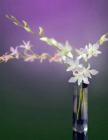 Vase of Orchids