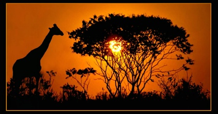 A Serengeti Sunset?