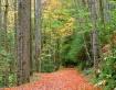 Treemont Trail