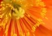 Flowerworks Displ...