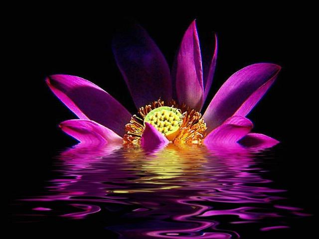Sinking Lotus