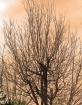 A Thousand Branch...
