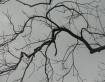 Aerial Spiderweb