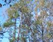 East Texas Trees ...