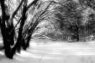 ~Winter Woodland~